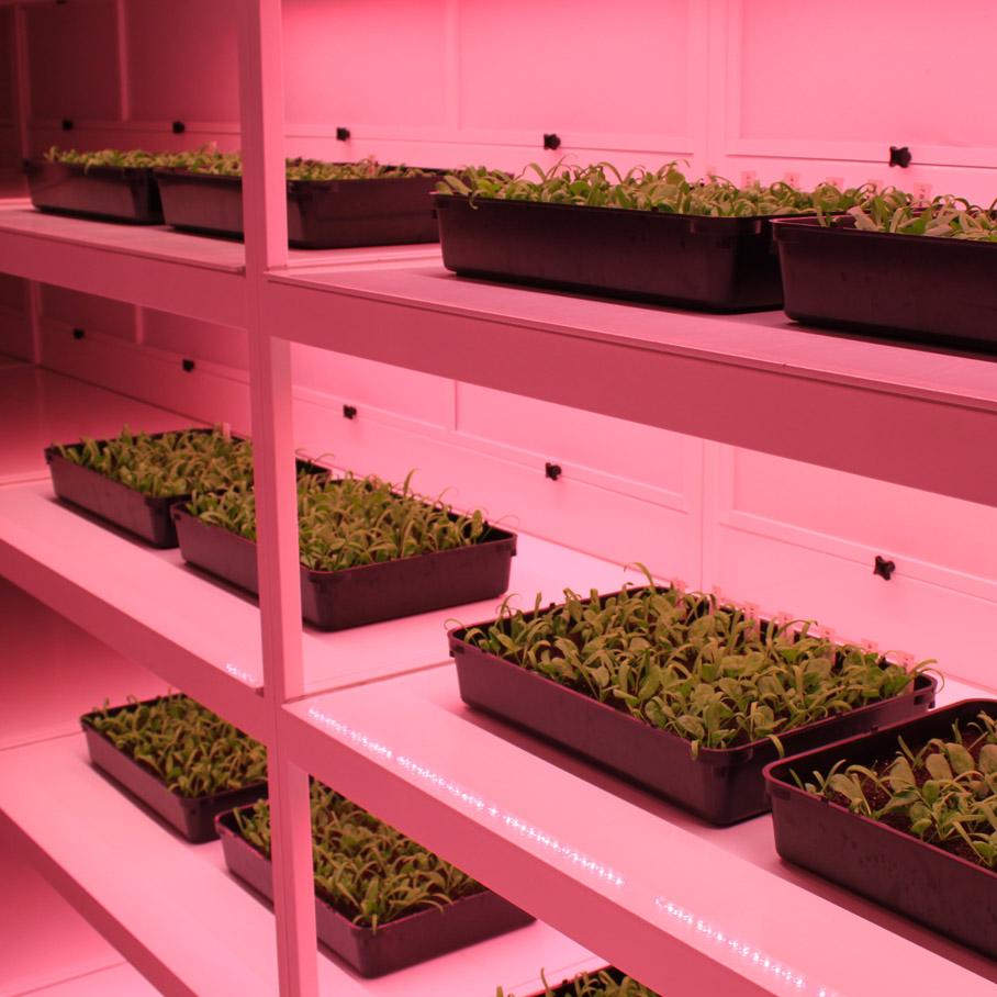 Seed Enkhuizen Kiemstelling KS1-001-1